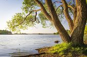 Scenic Tree On Shore Of Lake At Warm Summer Evening. Landscape Of River Bank With Tree Trunk And Cle poster