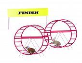 Racing rabbits reaching finish line