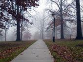 Foggy Morning Path