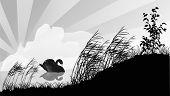 illustration with single black swan on lake