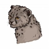 Cheetah Baby Tabby Cat From North Africa Isolated Hand Drawn Illustration. Southeast African Little  poster