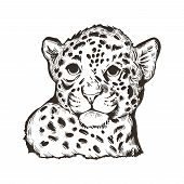 Jaguar Baby Tabby Portrait Closeup Of Animal Isolated Sketch Tshirt Print Monochrome Design. Panther poster