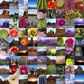 Colorful Desert Collage 2 - Arizona Collection