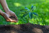Small Seedlings That Sprout From Complete Soil. With Human Hands Pouring Seedlings.the Concept Of Ca poster