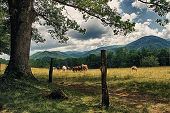 picture of cade  - This Country Living setting with horses was taken outside of Gatlinburg in Cades Cove Tennessee - JPG