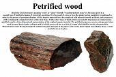 Petrified wood isolated on white