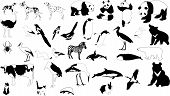 Black And White Animals poster
