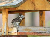 Grosbeak Feeder