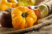 Fresh Organic Ripe Heirloom Tomatoes