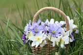 picture of windflowers  - Basket of wild spring flowers  - JPG
