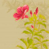 Allamanda Flower On Toned Background