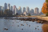 stock photo of canada goose  - Downtown Vancouver with Canada Geese in the foreground - JPG