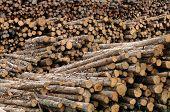 Quebec; Log In A Sawmill In Saint Adalbert