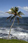 A costa de Le Diamant em Martinica