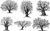 Different Trees.eps
