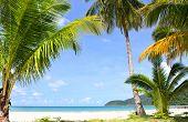 Palm trees on sunny tropical beach