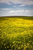 Wind Turbines In A Field Of Yellow Flowers