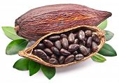 picture of bean-pod  - Cocoa pod on a white background - JPG