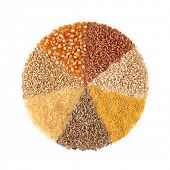 picture of whole-wheat  - Cereals  - JPG