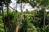 image of canopy  - Canopy Walkway in Kakum National Park - JPG