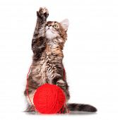 Cute kitten with red clew of thread, isolated on white background