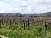 Pylons In The Vines