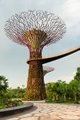Super Tree In Gardens By The Bay Singapore