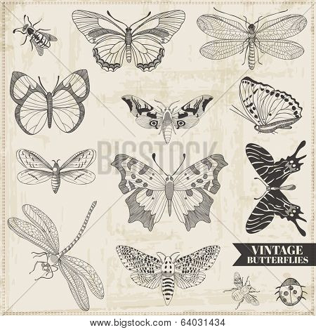 Vector Set: Calligraphic Hand drawn Butterflies - for design and scrapbook - in vector poster