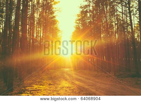 Forest Road Sunset Sunbeams poster