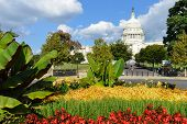 The Capitol in Spring - Washington DC - United States of America