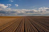 Cereal Spring Field