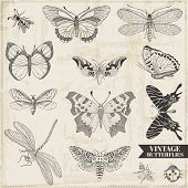 image of butterfly  - Vector Set - JPG
