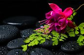 Spa Still Life With Green Branch Of Maidenhair, Pink With Red Fuchsia Flower And Zen Stones With Dro