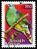 Postage Stamp South Africa 2000 African Green Pigeon, Bird