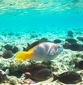 foto of sea-scape  - Coral fish in  Red Sea - JPG