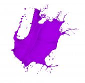 violet paint splash isolated on white background