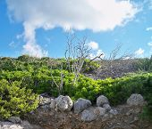 Half Moon Cay Trail landscaping