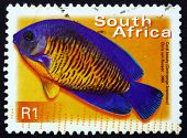 Postage Stamp South Africa 2000 Coral Beauty, Marine Fish