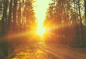 picture of sunrise  - Forest road under sunset sunbeams - JPG