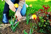 stock photo of grossed out  - Gardening  - JPG