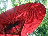 Kyoto Parasol