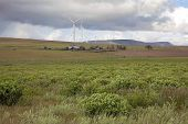 Farmland With Wind Turbines