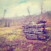 picture of afforestation  - Sawed Firewood Dropped in a Pile Photo Filter - JPG