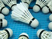 picture of shuttlecock  - Shuttlecocks surround one shuttlecock in blue background  - JPG
