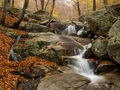 Autumn in Montseny