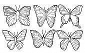 vector of 6 butterflies