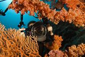 scuba diver photographing the coral reef
