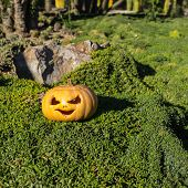 Halloween Scary Pumpkin In The Gren Grass