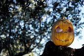 Halloween Scary Pumpkin In The Gren Tree Brushwood