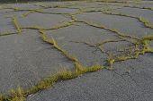 overgrown asphalt